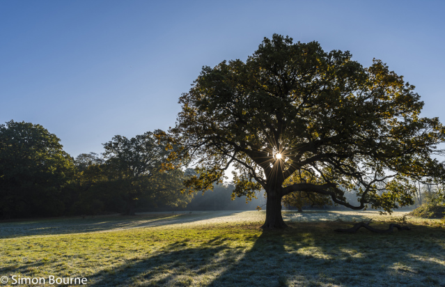 Simon Bourne, photography, photographer, north London, portfolio, image, autumn, sunrise, dawn, landscape, tree, Nikon, Trent Park, frost, sun rays, crepuscular
