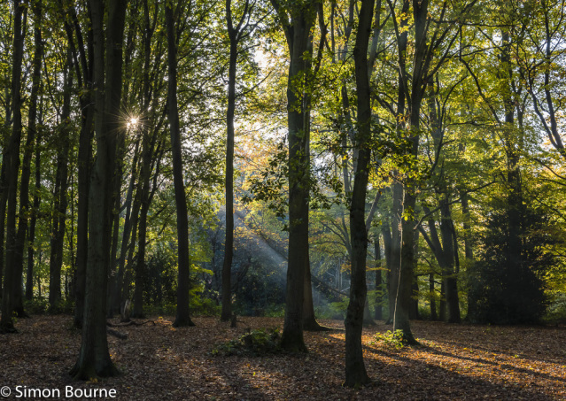 Simon Bourne, photography, photographer, north London, portfolio, image, autumn, sunrise, dawn, landscape, tree, Nikon, Trent Park