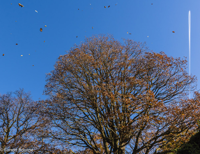 Simon Bourne, photography, photographer, north London, portfolio, image, autumn, landscape, tree, Nikon, wind, leaves, blowing, plane, vapour trail