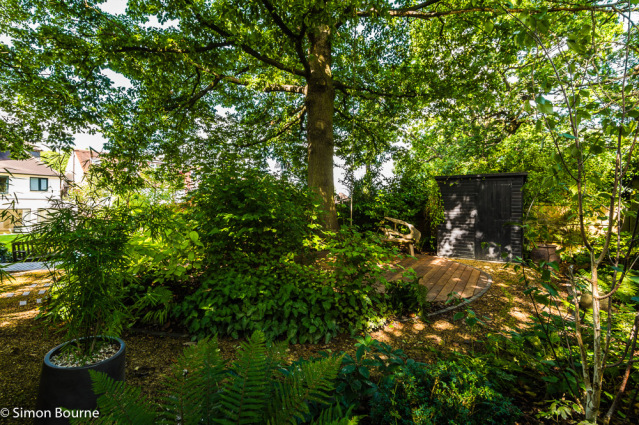 Simon Bourne, photography, photographer, north London, portfolio, image, gardens, summer, garden design, Jil Rickards, Jilayne Rickards, Nikon, SGD, NGS, Open Day, National Garden Scheme, Muswell Hill, East Finchley, oak tree, woodland, shade
