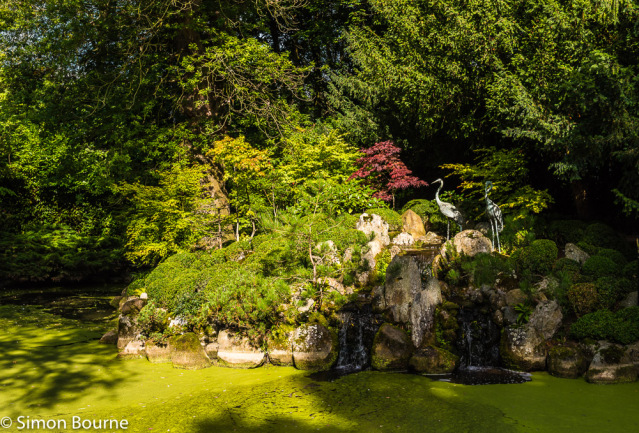Simon Bourne, photography, photographer, north London, portfolio, image, gardens, autumn, fall, Le Manoir, Oxfordshire, Raymond Blanc, grounds, Nikon, Japan, Japanese, tea garden, minimalist, lake, pond, heron, Acer