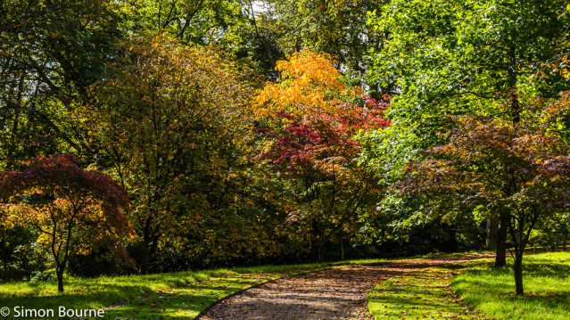 Simon Bourne, photography, photographer, north London, portfolio, image, gardens, autumn, Waddesdon Manor, Buckinghamshire, grounds, National Trust, house, Nikon, Rothschild, woodland, gravel paths, Acer, red, orange, yellow, dappled sunlight