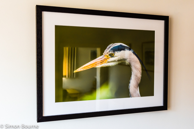 Simon Bourne, photography, photographer, north London, portfolio, image, gardens, spring, summer, lake, Cliveden, Buckinghamshire, home, The Astors, house, grounds, wildlife, beak, Heron, Nikon