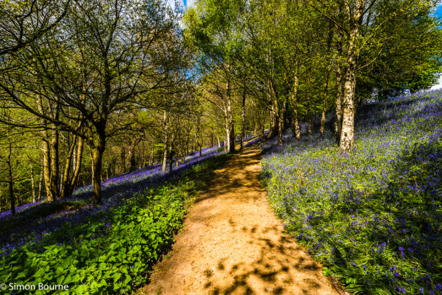 Simon Bourne, photography, photographer, north London, portfolio, image, gardens, spring, Emmetts Garden, Kent, woodland, wood, valley, Nikon, bluebells, purple, trees, blue flowers, path