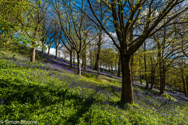 Simon Bourne, photography, photographer, north London, portfolio, image, gardens, spring, Emmetts Garden, Kent, woodland, wood, valley, Nikon, bluebells, purple, trees, blue flowers