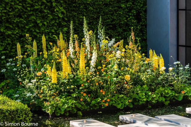 Simon Bourne, photography, photographer, north London, portfolio, image, garden, spring, flower show, Chelsea Flower Show, Nikon, lupin