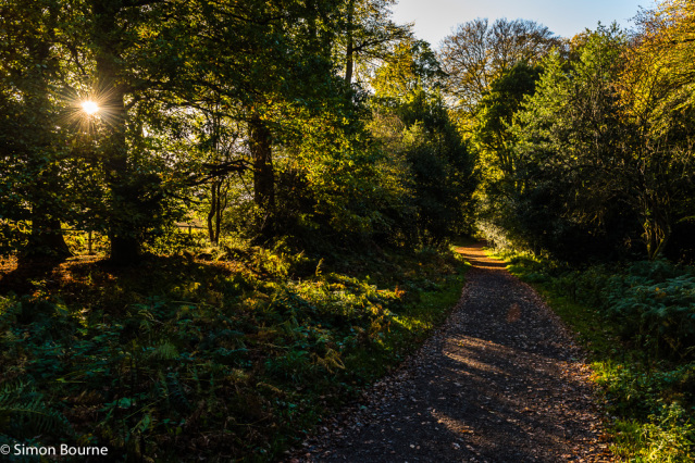 Simon Bourne, photography, photographer, north London, portfolio, image, autumn, sunrise, dawn, morning, landscape, tree, Nikon, Ashridge Estate, grounds, woodland, fern, starburst, sunburst, yellow and orange, leaves, path