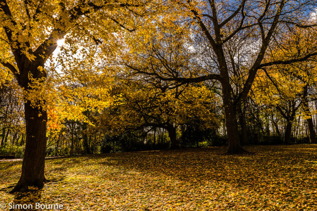Simon Bourne, photography, photographer, north London, portfolio, image, autumn, fall, sunrise, dawn, morning, landscape, trees, Nikon, Waterlow Park, grounds, woodland, woods, Highgate, starburst, sunburst, yellow, leaves, London