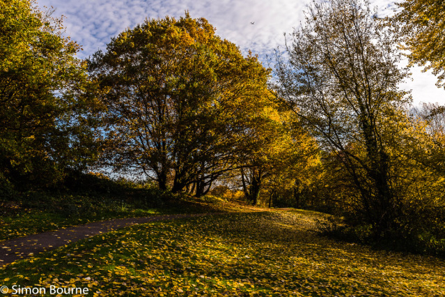Simon Bourne, photography, photographer, north London, portfolio, image, autumn, fall, early morning, landscape, trees, Nikon, Alexandra Palace Park, grounds, woodland, woods, Muswell Hill, yellow, leaves, path, pathway, plane