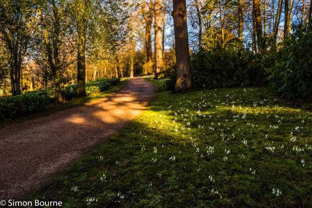 Simon Bourne, photography, photographer, north London, portfolio, image, gardens, winter, Cliveden, home, house, grounds, Astor, Buckinghamshire, Nikon, snowdrops, trees, white flowers, gravel path