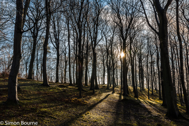 Simon Bourne, photography, photographer, north London, portfolio, image, winter, sunrise, dawn, morning, landscape, trees, Nikon, Sharpenhoe, Chiltern Hills, grounds, woodland, woods, starburst, sunburst, shadows, Bedfordshire