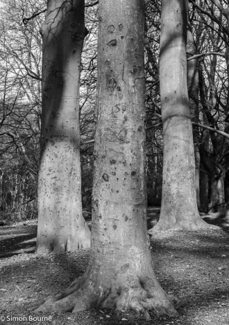 Simon Bourne, photography, photographer, north London, portfolio, image, landscape, tree, black and white, Matt Maran, Nikon, Hampstead Heath