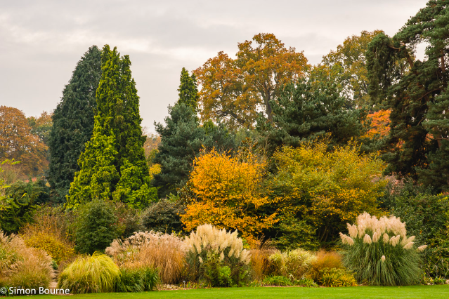 Simon Bourne, photography, photographer, north London, portfolio, image, gardens, autumn, landscapes, tree, RHS Wisley, Surrey, Nikon