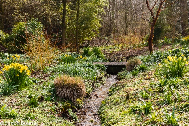 Simon Bourne, photography, photographer, north London, portfolio, image, gardens, spring, daffodil, stream, landscapes, tree, woodland, Beth Chatto, Essex, Nikon