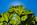 Simon Bourne, photography, photographer, north London, portfolio, image, gardens, autumn, Sheffield Park, Sussex, grounds, National Trust, landscape, Capability Brown, Nikon, lake, water, pond, Gunnera, starburst, sunlight