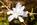 Simon Bourne, photography, photographer, north London, portfolio, image, gardens, spring, Magnolia stellata, London, garden designer, SGD, Jilayne Rickards, outside, white flower, star Magnolia, green background